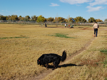 Rover Run Dog Park