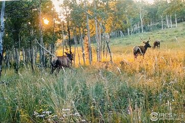 0 County Road 86 Red Feather Lakes, CO 80545 - Image