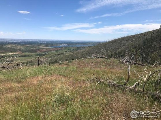 890 Hernia Hill Trail Bellvue, CO 80512